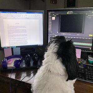 Dog sitting at computer